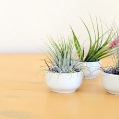 Bring a little green inside with these air plant and moss terrariums.