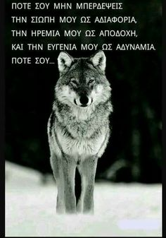 The Wolf: Type:Mammal Diet:Carnivore Average life span in the to 8 years Size:Head and body, 36 to 63 in to 160 cm); Tail, 13 to 20 in to 51 cm) to 175 lbs to 79 kg) Group name:Pack Protection animals Wolf Spirit, My Spirit Animal, My Animal, Mundo Animal, Wolf Photos, Wolf Pictures, Nature Photos, Free Pictures, Wolf Love