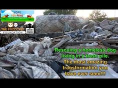 Defeated stray dog living in trash heap makes a remarkable transformation and a new friend (VIDEO) » DogHeirs | Where Dogs Are Family « Keywords: Eldad Hagar, Los Angeles, trash heap