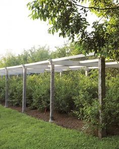Ripe for the Picking: Growing Berries at Martha's Farm - Martha Stewart Gardening