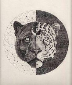 Jaguar's split