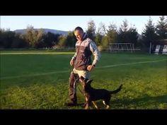 Dara Dragon Slovakia, obedience 6,5 months - YouTube 5 Months, Dragon, Pets, Youtube, Animals, Animales, Animaux, Dragons, Animal