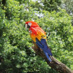 Cute Heute wurde Pippi Langstrumpfs Papagei Rosalinda im Karlsruhe Zoo von zahlreichen