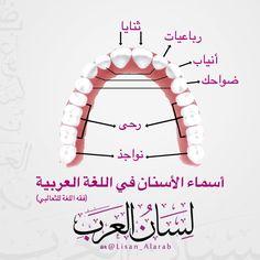 اسماء الاسنان