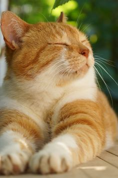 Cute Baby Cats, Cute Cats And Kittens, Cute Baby Animals, Kittens Cutest, Funny Animals, Grand Chat, Gato Animal, Orange Cats, Cat Quotes