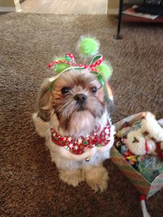 Lily is getting ready for Christmas!