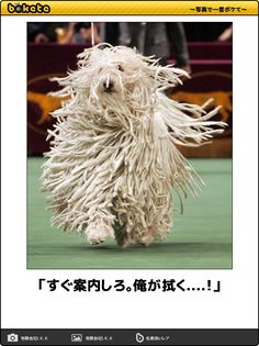Animals And Pets, Funny Animals, Cute Animals, Komondor, Can't Stop Laughing, Feeling Sad, Illustrations And Posters, Haha Funny, Comedy