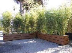 bamboo & concrete planter - Google Search Bamboo In Pots, Bamboo Planter, Fence Planters, Vertical Planter, Wood Planter Box, Bamboo Fence, Indoor Planters, Concrete Planters, Diy Planters