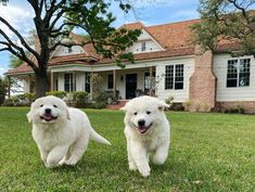 Joanna Gaines Instagram, Clint Harp, Birthday Morning, Hgtv Designers, Chip And Joanna Gaines, Retriever Puppy, New Shows, Fixer Upper, Cute Puppies