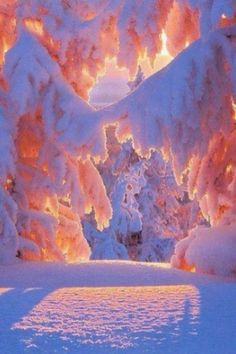 Beatiful winter wounder land