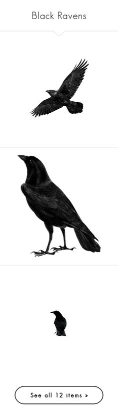 """""""Black Ravens"""" by zakhx ❤ liked on Polyvore featuring ravens, home, home decor, animals, birds, fillers, halloween, black, backgrounds and detail"""