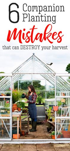 Your companion planting layout can make or break your vegetable garden. Use this companion planting chart to avoid common companion planting mistakes that can destroy your vegetable and herb garden.