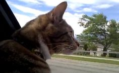 Daily Cute: Kitty on the Road (video)
