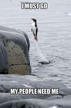 POPHANGOVER » Blog Archive » Animal Humor (15 Pics)