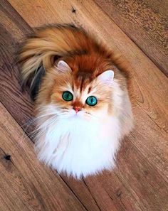 http://www.freekibble.com/amazing-cats-12/5/