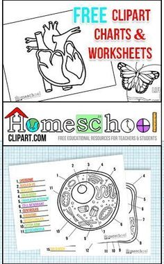 plant cell coloring diagram worksheet answers | science-cells ... - Animal Cell Coloring Page Answers