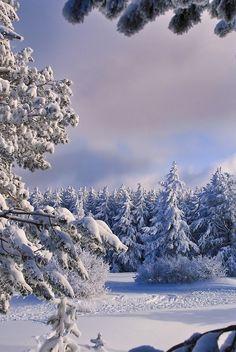 ending of winter day by Plamen Troshev