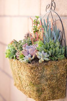 Succulents in a wall planter... a great wall to dress up the look of a backyard wall. See more of this low-maintenance backyard makeover on The Home Depot Blog.