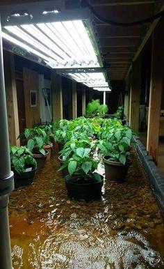 Rain Gutter System Garden Pinterest Gardens Gutter