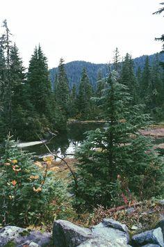 Mount Rainier National Park, WA Flickr/Instagram