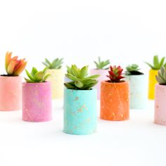 These cement planters are perfect for succulents or small cacti. Choose your color gradient in the drop down menu. First photo shows small planters, second photo shows the shape of the medium and large planters. Small Cactus, Mini Cactus, Cactus Flower, Flower Vases, Flower Pots, Colorful Succulents, Succulents In Containers, Succulents Garden, Succulent Planters