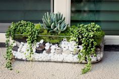 Life in the Fun Lane: Fun Little Succulent Display