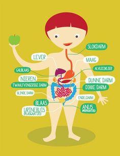 Image result for spijsverteringsstelsel kinderen