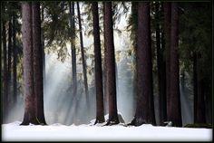 Il bosco che suona by Massimo Piazzi on 500px