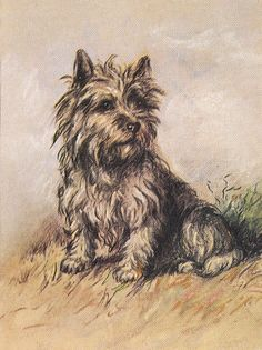 Beautiful print. CAIRN TERRIER SEATED DOG...