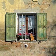 .@poscla | Gatti con finestra
