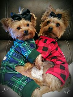 Excellent Yorkshire Terriers info is offered on our website. Read more and you wont be sorry you did.