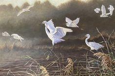 "Everglade Egrets 26"" x 36"" Original British Bird Paintings For Sale - Alan M Hunt#birds #nature #bird #birdsofinstagram #wildlife #naturephotography #birdphotography #photography #birdwatching #wildlifephotography #animals #ig #of #birding #best #birdlovers #love #egrets #everglADES #naturelovers #captures #perfection #canon #nikon #photooftheday #art #instagram #animal #birdlife Bird Paintings, Paintings For Sale, Photorealism, Birdwatching, Wildlife Art, Bird Prints, Bird Art, Wildlife Photography, Natural World"