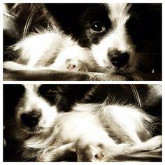 Puppy sleepy!