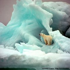 Polar bear on an iceberg in the Arctic. Their habitat is greatly threatened and shrinking daily. Those who deny climate change only need to learn about what is happening to the polar bears to understand.