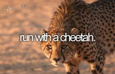 Granted you would only be able to run with him for a few seconds and then he would leave your butt in the dust. ALSO I want to run WITH a cheetah, not FROM a cheetah!