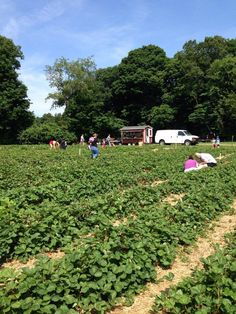 *Bishops Orchards (Guilford)*  From 8 a.m. until 7 p.m., you can sample some complimentary cider and children receive a balloon with a visit on Open House Day. Don't miss the Pick Your Own strawberry fields too.