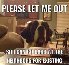 St. Bernard meme - she loves to bark