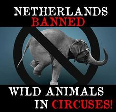 Animals in Circuses suffer terribly!.