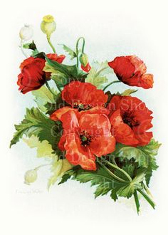 WALKER RED POPPIES Vintage Flowers Digital Image for Cardmaking Scrapbooking Altered Art Mixed Media Download 185. $4.00, via Etsy.