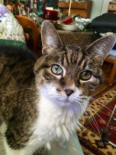 My parents cat turned 20 this year! She still thinks she's a kitten. http://ift.tt/2hugils