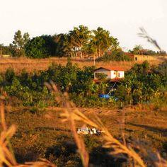 Sítio Semente é referência em Sistemas Agroflorestais. Oferece produtos orgânicos e cursos, com base na permacultura e ensinamentos de Ernst Götsch.