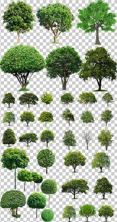 Клипарт - Колекция деревьев на прозрачном фоне