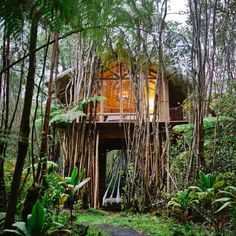 One dreamy DIY vacation home: After becoming fascinated with the tiny house movement, host Kristie built this eco-friendly Hawaiian home on the Big Island with her own two hands. Off the grid, up the trees, in the rainforest--it's downright magical.