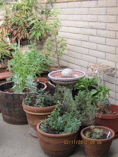 TD: Reclaimed barrel + Terracotta    (Link: Easy Steps to Design a Container Garden on a Patio or Balcony)