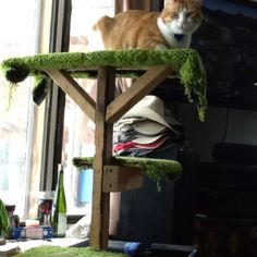 Cat tree my husband made me for my Bday love it