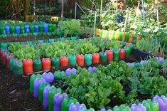 Do you just throw away plastic bottles knowing they're trash? Here is a list of ideas on how to reuse plastic bottles in the garden! Types Of Vegetables, Growing Vegetables, Container Plants, Container Gardening, Reuse Plastic Bottles, Recycled Garden, Bottle Garden, Vegetable Garden Design, Pet Bottle
