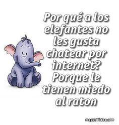 Frases, chistes, anécdotas, reflexiones y mucho más.: Chiste con animalitos. ¿Porque a los elefantes no les gusta chatear por Internet?