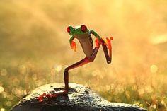 Skinny Dancing Frog