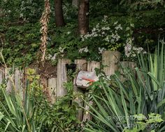 Abandoned Photography  Forgotten Mailbox  Vintage Art by pikyphoto