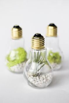 DIY Lightbulb Terrariums | cladandcloth.com